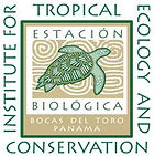 Institute for Tropical Ecology and Conservation, Sharon Kessle, Isla Colon, Bocas del Toro, Panama, Primate Ecology and Behavior, primate, monkey, anthropology, primatolog, biology, teaching, course, module, lecture, research project
