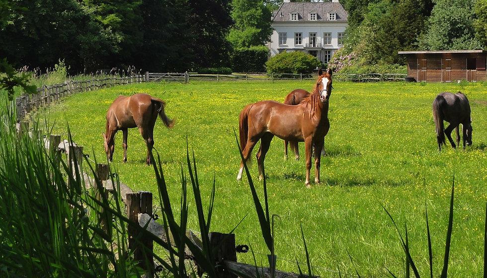 horse_veterinarian.jpg