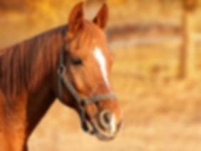 Web Horse.jpg