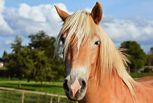 Web Horse 2.jpg
