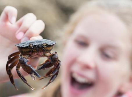Questa estate in spiaggia basta tortura di granchi e pesci nei secchielli. Il monito di ENPA