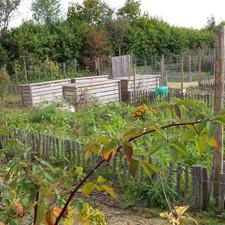 Herblay-Jardin-Potager-20141022_114846.j