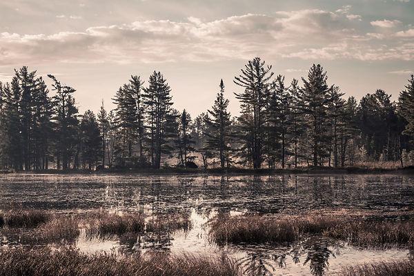 Michigan swamp dark.jpg
