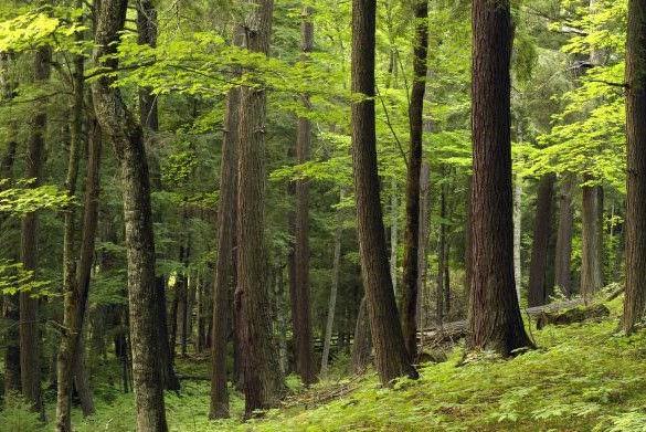 Michigan Forest.jpg