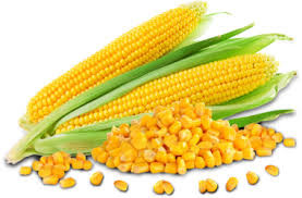 corn test for constipation