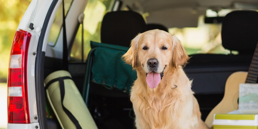 On the Road Again – Summer Trips with Your Dog