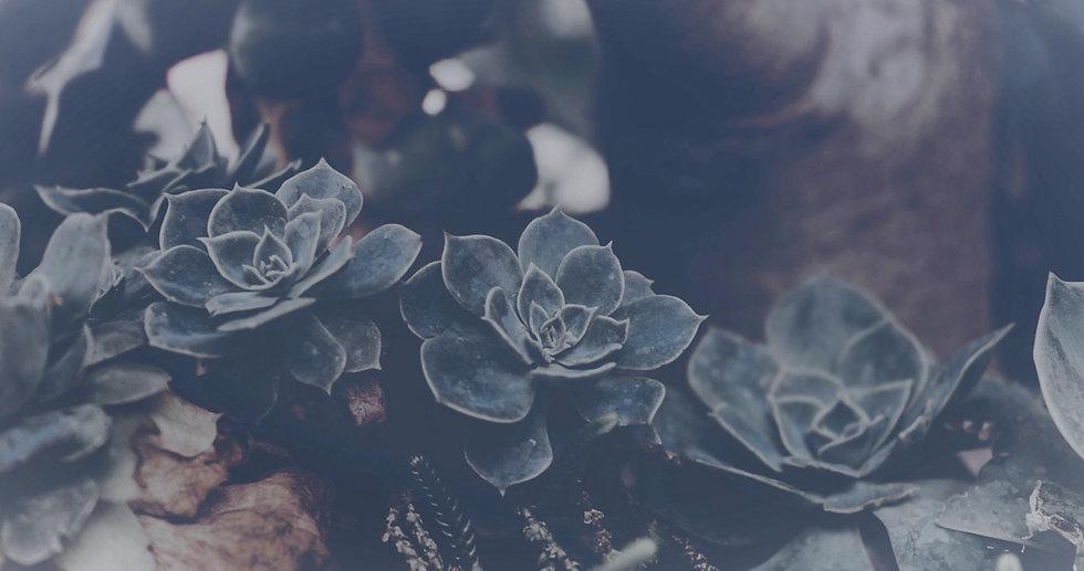 Succulents_edited_edited.jpg