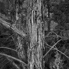 Monument Tree