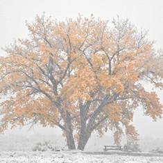 Late Autumn Snow Storm