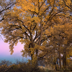 Connected Lakes Cottonwood
