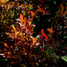 Grand Mesa Autumn