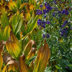 Grand Mesa Wildflowers
