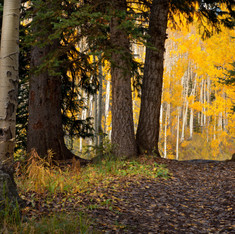 Grand Mesa National Forest