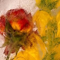 Flowers on Ice