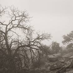 Canyon Rim Fog