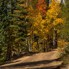 Lincoln Creek Road, Independence Pass