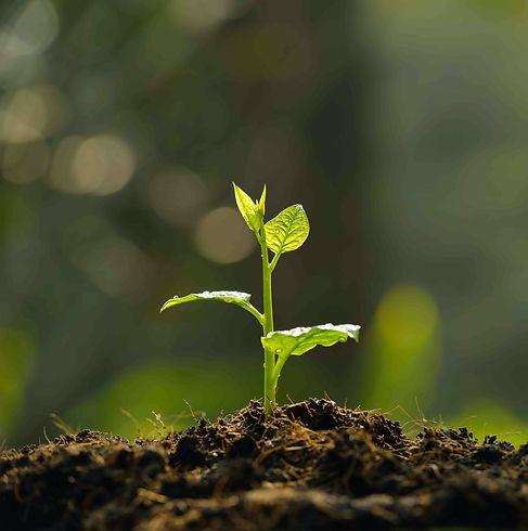Plante poussant dans un sol fertile comme la connaissance qui grandit à partir du moment où elle est mise en pratique sur l'exploitation. Voici la démarche de formation complète mise en place par TERREOM.