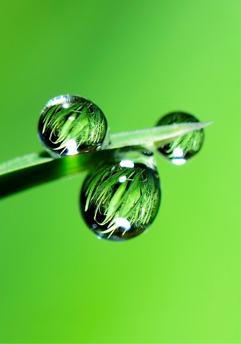L'eau, élément essentiel à une vie durable et prospére. Chez TERREOM, nous considdérons que la pérennité du système agricole est subordonnée à la présence durable d'exploitations économiquement et écologiquement pérennes. Pour nous, cette pérennité repose sur des sols fertiles, des actifs agricoles impliqués et épanouis, et la mise en place de système de production innovants et rentables.