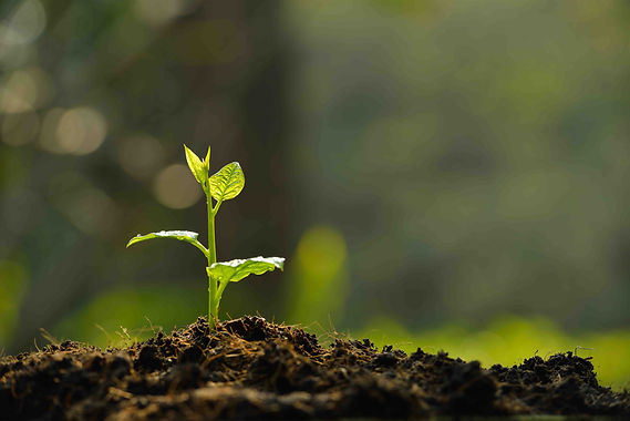 Plante_sol_fertile.jpg