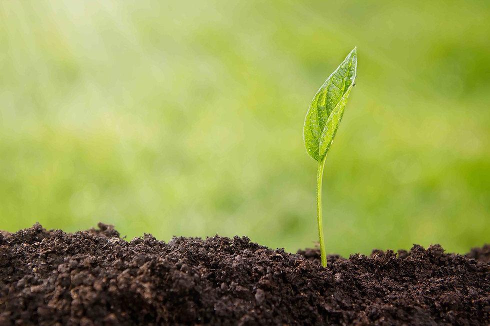 Plante poussant dans un sol fertile. Cette image rend concret l'objectif de TERREOM : proposer des formations aux actifs agricoles pour leur permettre de développer la fertilité de leur sol et de développer la rentabilité des systèmes de production.