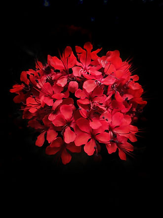 flower red.jpeg