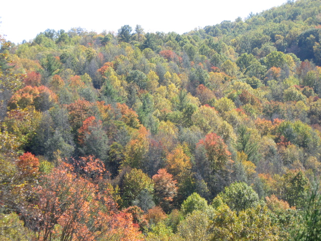 Sugar Grove NC Mountains Fall