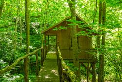 Woodland Tree House