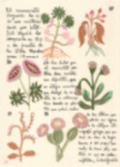 Voynich-3.jpg