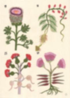 Voynich-2.jpg
