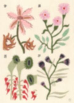 Voynich-4.jpg