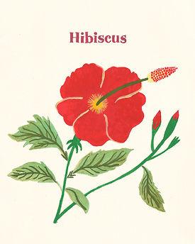 MarinaSiero-Hibiscus.jpg