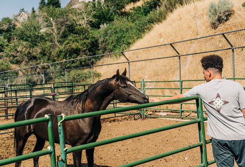 Equestrian Facililties