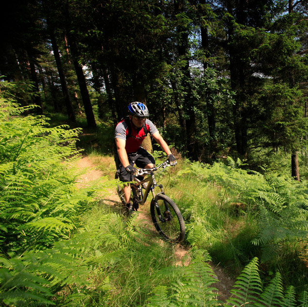 Mountain biking in Galloway