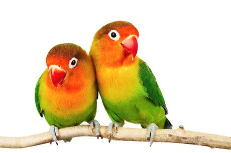 oiseaux exotique domaine de revert