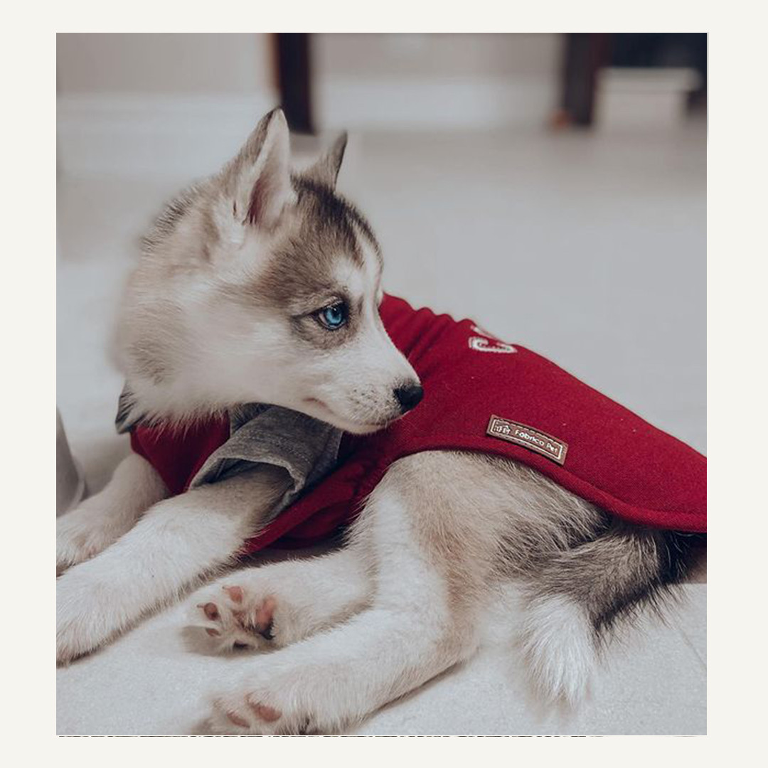 @ludo.husky