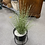 Thumbnail: Ex-Display Artificial House Plant In Stand (SS Dine 061 Plant)