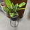 Thumbnail: Ex-Display Artificial House Plant In Stand (SS Dine 063 Plant)
