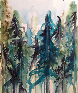 Blue Spruces