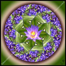 Hawaiian Blue Ginger Lotus