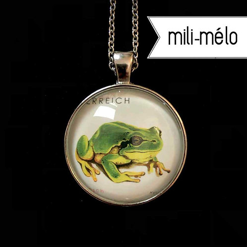 mili-mélo: Frosch (Tierschutz Österreich)