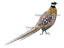 Reeves pheasant shoot cards game shooting origina artwork