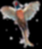 Rising pheasant bespoke shoot cards original artwork game shooting
