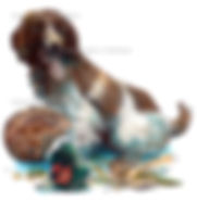 Spaniel working dog with pheasant, game shooting, shoot cards