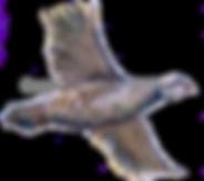 Partridge in flight bespoke shoot cards game cards game shooting