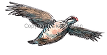 Bespoke shoot cards partridge in flight game shooting