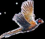 Pheasant original artwork bespoke shoot cards