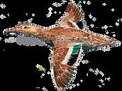 Bespoke shoot cards game shooting duck in flight orignal artwork