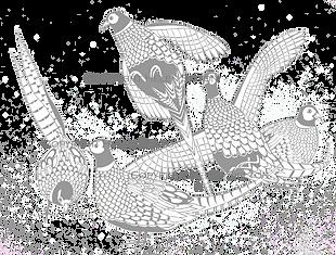 pheasant scene, pheasant artwork, shoot cards, game cards, bag cards, pheasant invitiation, pheasant card, pheasant wedding, duck artwork, duck card