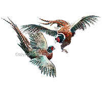 Fighting pheasants original artwork bespoke shoot cards game shooting