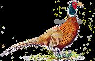 Pheasant original artwork bespoke shoot card